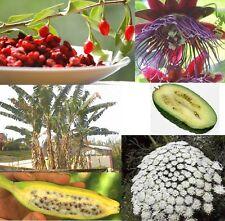 Tolles Obst: Banane - Maracuja - Gojibeere und dazu noch die Bio-Zahnstocher !