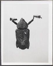 Unusual Vintage Photo Beetle Bug Scientific Specimen Entomology 258144
