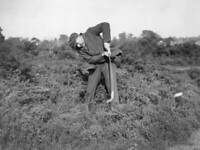 OLD PHOTO of 1922 British Golfer James Braid In The Rough At Walton Heath