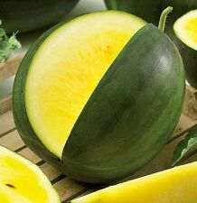 Seeds Rare Watermelon Janosik Yanosik Yellow Vegetable Organic Heirloom Ukraine
