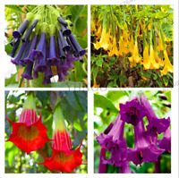 100 PCS Seeds Flowers Bonsai Brugmansia Datura Rare Plants Mix Easy To Grow New