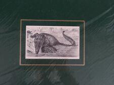 Barres de crocodile (crocodilus porosus); Gravure sur bois pour 1898 (gr633)
