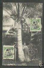 Niue rppc Savage island Girl Cocoanut Polynesia stamps 1929 maximum card