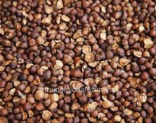Photo. Close-up Many Mexican Jumping Beans