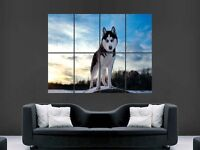 HUSKY PRINT ART WALL PICTURE POSTER  GIANT HUGE