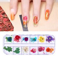 3D Trocken Blumen Nagel Kunst Dekoration Gemischt Colorful Nail Stickers Decal