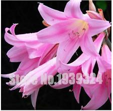 True lily bulbs perfume lily rizoma(not lily seeds) bonsai flower bulbs High