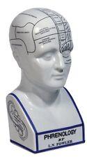Porcelain Phrenology Head Decorative Educational Durable Desktop Bust