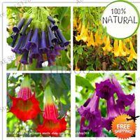 100 Datura Mini Seeds Plants Bonsai Flower For Garden Ing Brugmansia As Home