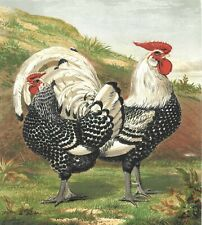 c1890 Print Chickens Rooster Wright Poultry Original Antique Chromolithograph