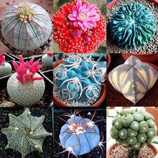 100Pcs Rare Mixed Succulent Cactus Seeds Prickly Pear Organic Home Plants CA