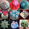 100Pcs Rare Mixed Succulent Cactus Seeds Prickly Pear Home Plants CA