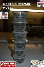 6 cups of Christmas Moss plants Easy Aquarium aquascaping planted tank US grow