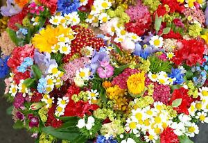 +2000 Samen Blumenwiese Sommer Bienen & Schmetterlinge Mischung Mix Wildblumen