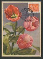 BUND MK 1957 FLORA KÖLN TULPE TULIP MAXIMUMKARTE CARTE MAXIMUM CARD MC CM d7363