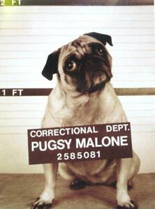 """Somebody Squealed!"" 'Pugsy Malone' PUG DOG in JAIL Funny Birthday Card AVANTI"