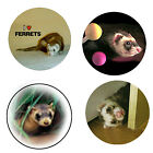 Ferret+Magnets%3A+4+Way-Cool+Ferrets+for+your+Fridge+or+Collection-A+Great+Gift