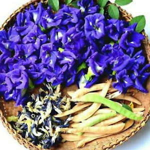 100% Organic Natural Dried Butterfly Pea Tea Blue Flower Healthy Drink -20g