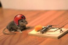 Mouse Vs Mouse Trap Funny lol FRIDGE MAGNET (2 x 3 inches)(AD)