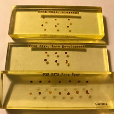 Old Biology Microscope Slides Embryology Of Frog Sea Urchin Multiple Sections