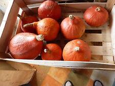 18 graines petit POTIMARRON ROUGE semences bio  Seeds  de France Potimaron bio