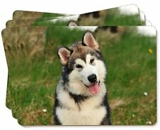 Alaskan Malamute Dog Picture Placemats in Gift Box, AD-AM2P