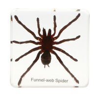 Real Insect Specimen Paperweight Insect Collection Gift - Tarantulas