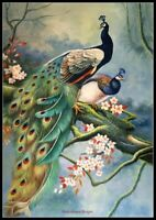Peacock 17 - Chart Counted Cross Stitch Pattern Needlework Xstitch DIY Craft