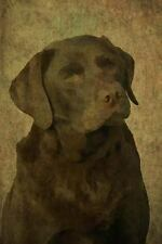 Renaissance: Chocolate Lab : Labrador Retriever: Journal/Notebook/Diary by.