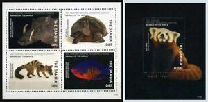 2017 Gambia, fauna, National Geographic, red panda, angelfish, civet, babirusa