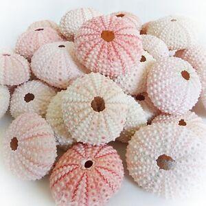 Muschelmix Seeigel 36 St rosa - Deko Maritim Bastel Muscheln Muschel Dekoration