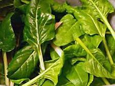 Swiss Chard Seed, Perpetual Spinach, Heirloom, Organic 500+ Seeds, NON GMO