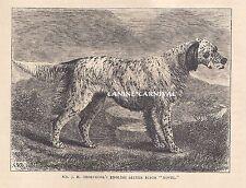 Antique Print 1881 English Setter Dog Vintage Art Print Novel Champion