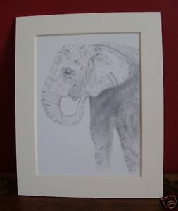 10 x 8 inch mounted print of Elephant pencil drawing
