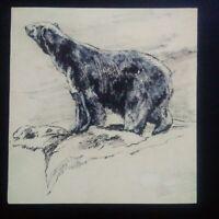Beau dessin original ours polaire encre de chine et charbon années 40 TBE