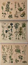 3 Antique Botanical Book Plates for Framing Latin Names German Botany #S280
