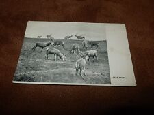 Early  postcard - A study of Deer / Stags