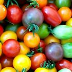 Rainbow Cherry Tomato Mix Heirloom Seeds Choose Packet Size  bin94