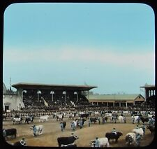 Glass Magic Lantern Slide STOCK SHOW AT BUENOS AIRES RACE TRACK C1910 ARGENTINA
