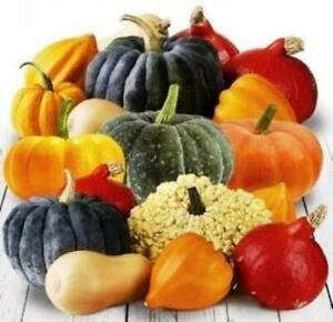 Seeds Pumpkin 7 Simeon Mix Ornamental Giant Vegetable Garden Organic Heirloom