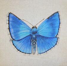 Adonis Azul Tex ex original británico Mariposas Cojín Panel Mariposa Lino