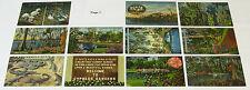 1930s 1940s 1950s FLORIDA Attractions AMUSEMENT PARKS Postcard lot, 43 Postcards