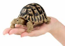 Japan Greek Tortoise Turtle Replica Model Action Figure with Joints 10cm