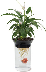 Penn-Plax Aquaponic Betta Fish Tank Promotes Healthy Environment for Plants and