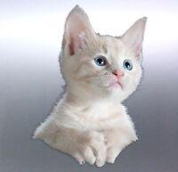 Baby kitten Sticker Vinyl cut Australia real photo 150x105mm cat cats animal
