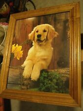 Golden retriever posting for a picture (Reduce