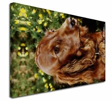 More details for irish red setter dog 'love you mum' x-large 30