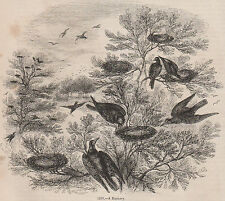 ANTIQUE 1845 PRINT VINTAGE ROOK TREE NEST ROOKERY FARMING HUNTING WILDIFE BIRD