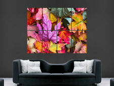 COLOURED LEAVES NATURE POSTER FALL NATURE IMAGE LARGE PICTURE