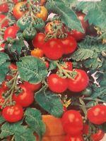 Tomate Cerise Red Cherry 300 semillas  seeds -  Cereza Rojo